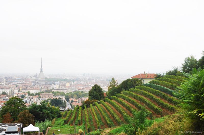 Turin_villa_della_regina_vigne_2