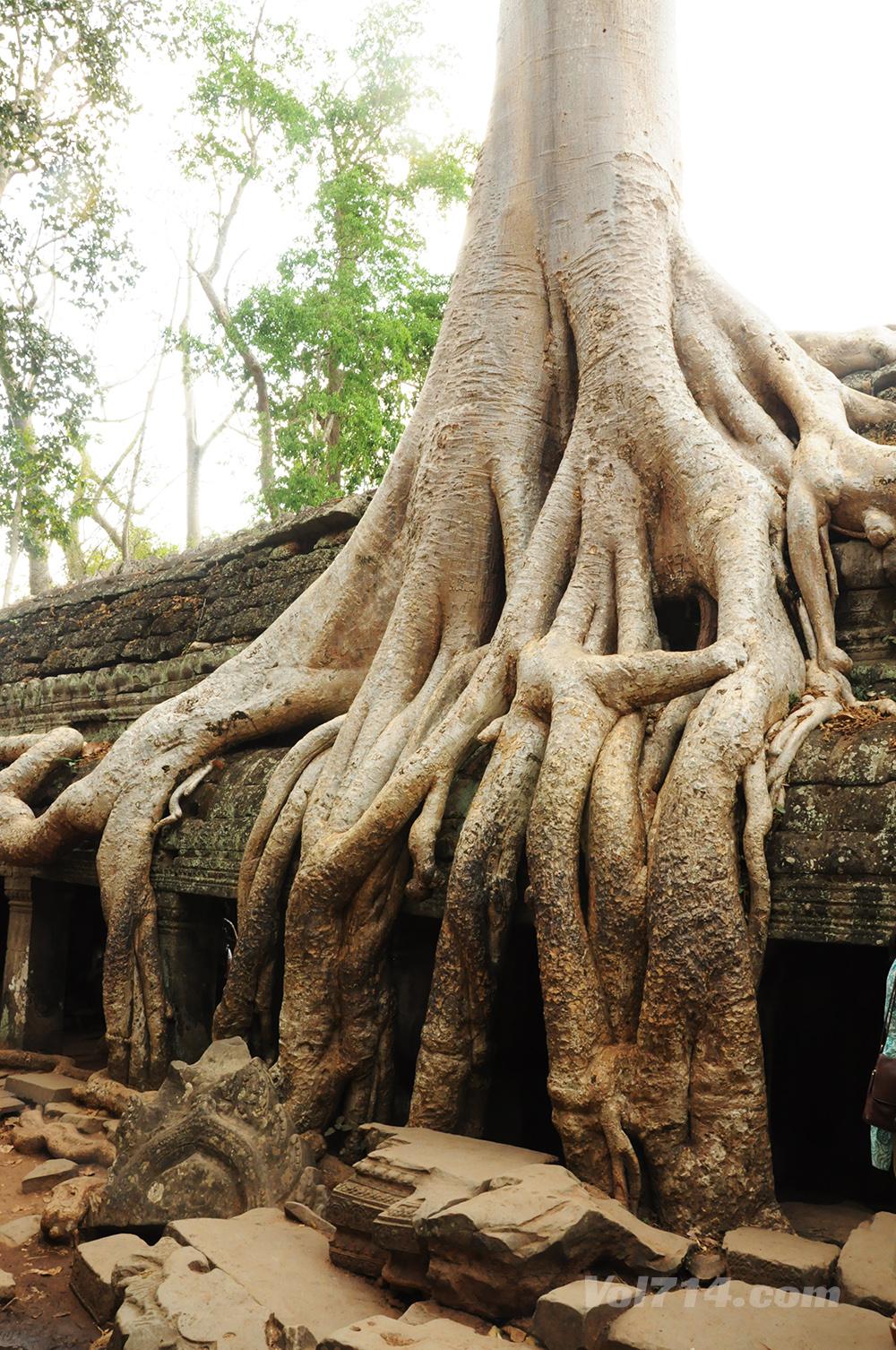 Cambodge 186