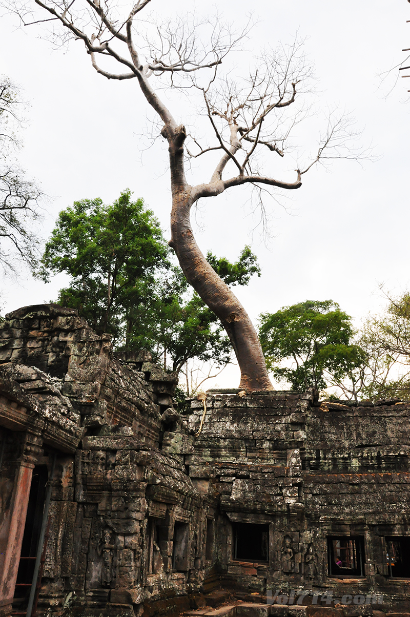 Cambodge 213