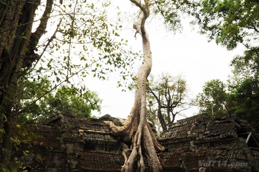 Cambodge 216