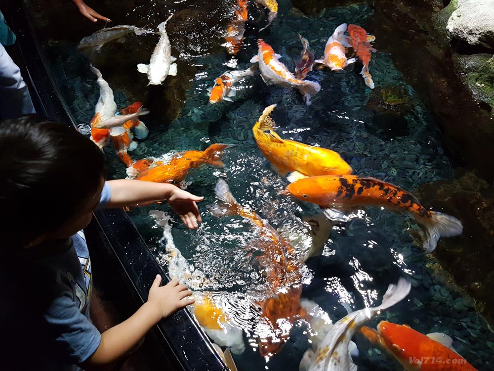 aquarium-cineaqua-paris (2)