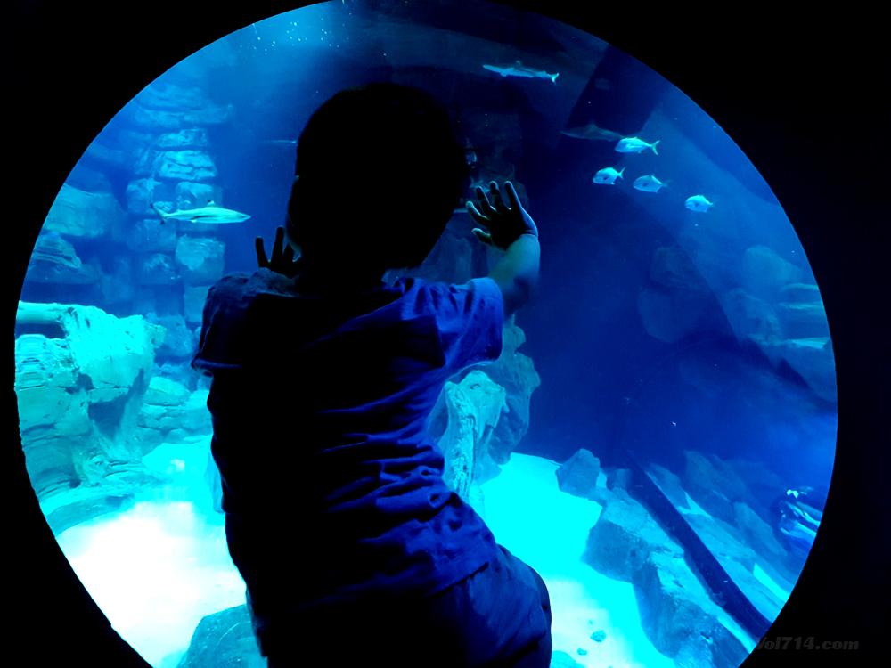 aquarium-cineaqua-paris (7)