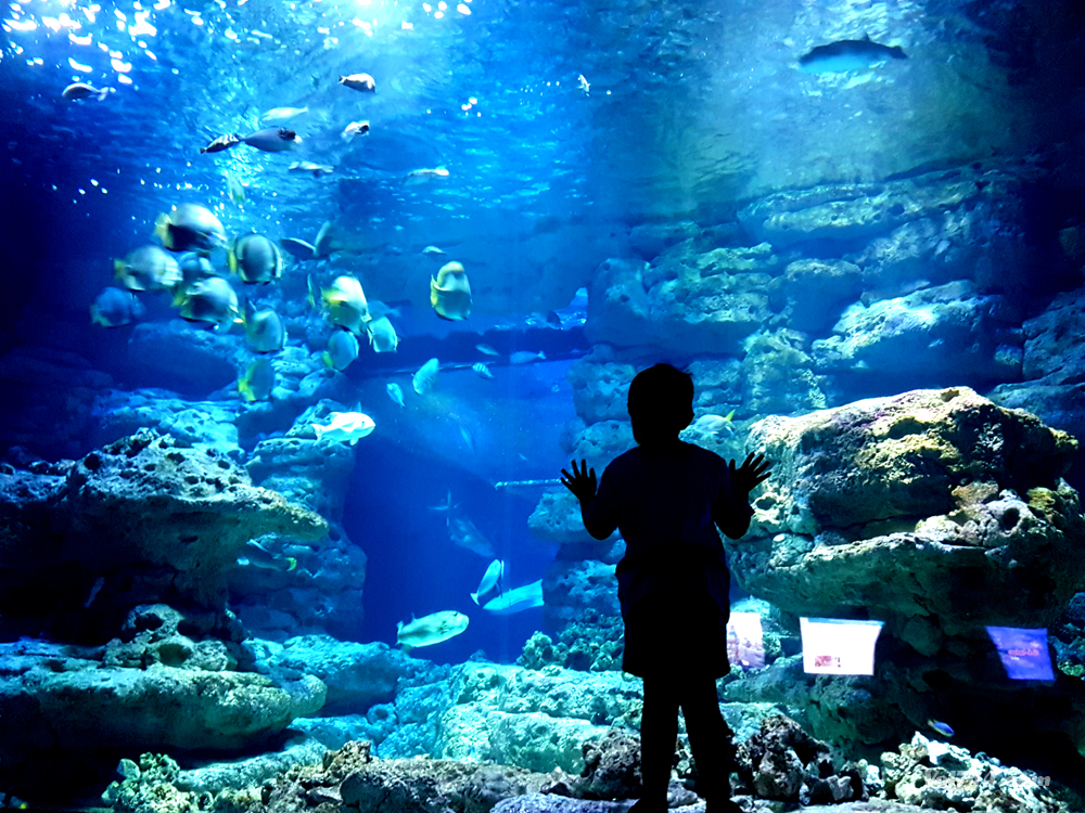 plongez sous le trocad ro dans l 39 aquarium de paris vol