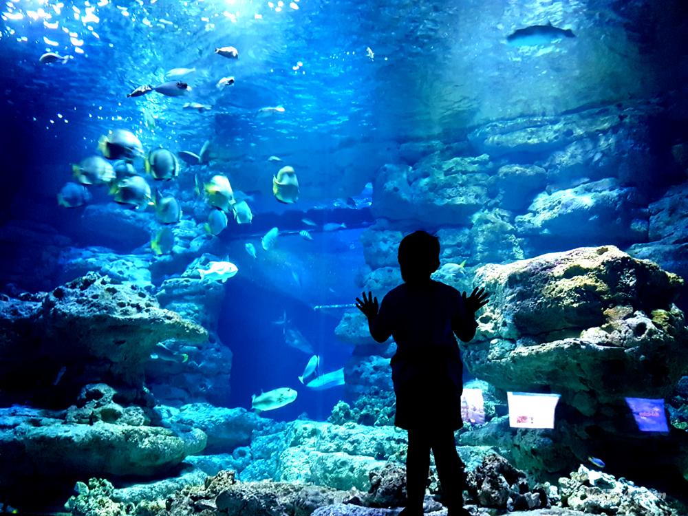 L'aquarium trocadero