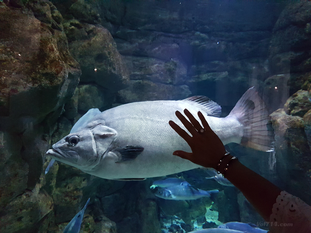 aquarium-cineaqua-paris (9)