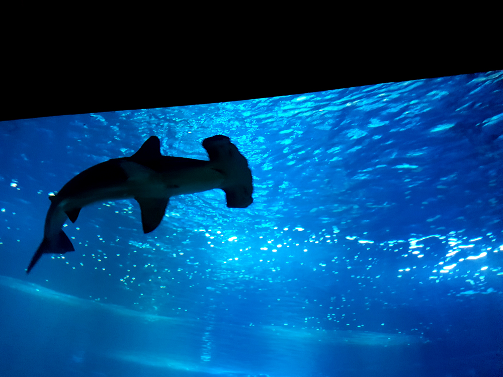aquarium-cineaqua-paris-requin