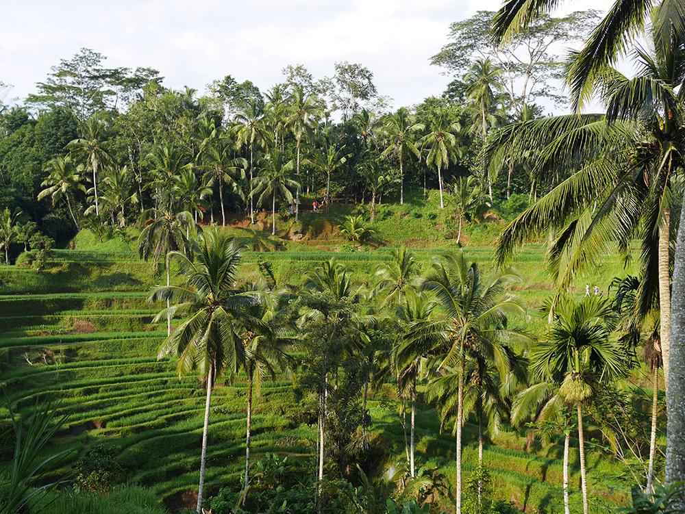 riziere-terrasse-tegallalang-bali (7)